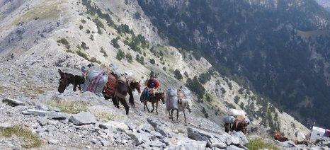 Σε διαβούλευση έως τις 10 Σεπτεμβρίου ο κανονισμός για τα «διαβατήρια των ιπποειδών»