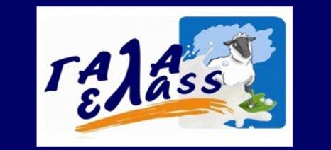 Συμβολαιακή παραγωγή γάλακτος από τον Συνεταιρισμό Αιγοπροβατοτρόφων Ελασσόνας μέσω Τράπεζας Πειραιώς