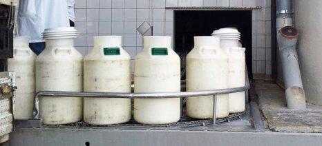 Κάλεσμα στον Τύρναβο αύριο για τις τιμές παραγωγού αιγοπρόβειου γάλακτος