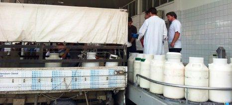 """Στην """"τσιμπίδα"""" του """"Άρτεμις"""" δύο επιχειρήσεις που εισήγαγαν πρόβειο γάλα από την Ιταλία και το διέθεσαν ως ελληνικό"""