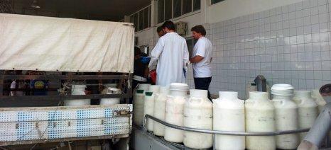 Προστασία και διασφάλιση της φέτας ζητούν 38 βουλευτές του ΣΥΡΙΖΑ με ερώτησή τους για τις χαμηλές τιμές στο πρόβειο γάλα