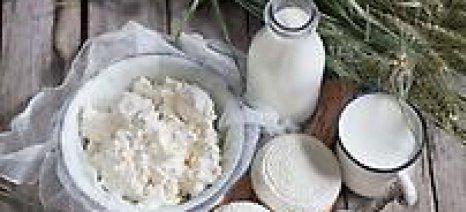«Ελληνικό σήμα» για τις πρώτες έξι εταιρίες γαλακτοκομικών προϊόντων στη ΔΕΘ