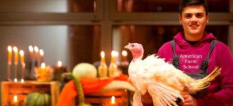 Στην αγορά και φέτος η γαλοπούλα της Αμερικανικής Γεωργικής Σχολής