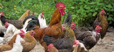 Oι εστίες της νόσου της Γρίπης των πτηνών συνεχώς αυξάνονται στη χώρα μας