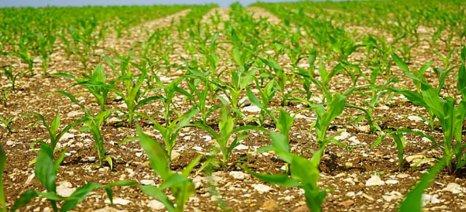 Έως 10/9 τα παραστατικά βιολογικής γεωργίας - κτηνοτροφίας για αποφυγή απώλειας ενισχύσεων