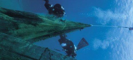 """Δύο τόνοι δίχτυα- """"φαντάσματα"""" ανασύρθηκαν από την θάλασσα στο Στρατώνι Χαλκιδικής"""