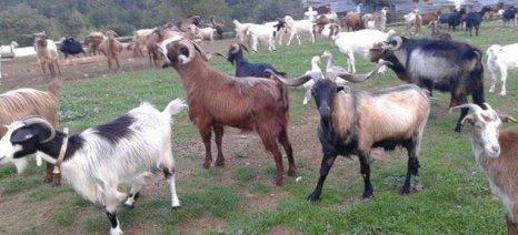 Δίκτυο για τη διάσωση και προστασία των ελληνικών φυλών αγροτικών και οικόσιτων ζώων