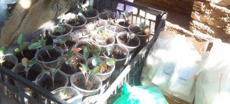 Εκατοντάδες άτομα αντάλλαξαν σπόρους στην πανθεσσαλική γιορτή ανταλλαγής παραδοσιακών σπόρων