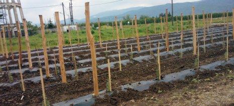 Τους νεοεισερχόμενους αγρότες προσελκύει κυρίως η καλλιέργεια super-fruits