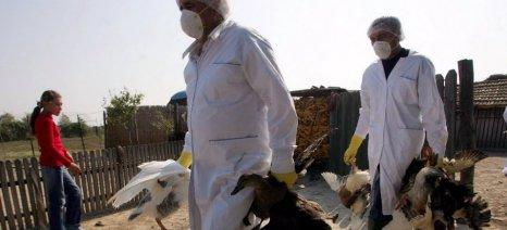 Σε επιφυλακή οι κτηνιατρικές υπηρεσίες της Β. Ελλάδας για τη γρίπη των πτηνών