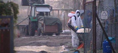 Κρούσματα γρίπης των πτηνών σε πτηνοτροφείο της Βουλγαρίας