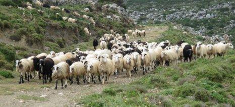 Όμηροι της Διεύθυνσης Δασών οι κτηνοτρόφοι της Χίου