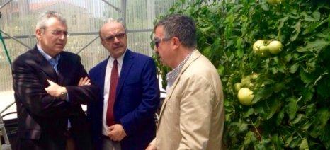 Χαρακόπουλος: Να μην χαθεί η συνδεδεμένη ενίσχυση της βιομηχανικής τομάτας
