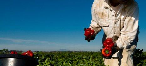 Ερώτηση 64 βουλευτών του ΣΥΡΙΖΑ για τις πραγματικές ανάγκες της αγροτικής οικονομίας σε αλλοδαπούς εργάτες γης