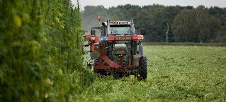Παίρνει ΦΕΚ, επιτέλους, η υπουργική απόφαση για την καλλιέργεια της κλωστικής κάνναβης