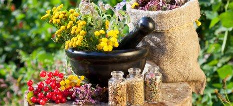 Τα αρωματικά και φαρμακευτικά φυτά του Κόζιακα αξιοποιεί το Επιμελητήριο Τρικάλων