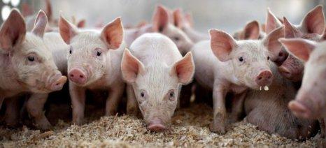 Αύξηση εξαγωγών χοιρινού, βοδινού, ελαιολάδου και γαλακτοκομικών βλέπει η Commission
