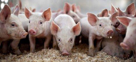 Η αυξημένη διεθνής ζήτηση οδηγεί σε ρεκόρ εξαγωγών χοιρινού και μεταποιημένης τομάτας στην Ε.Ε.