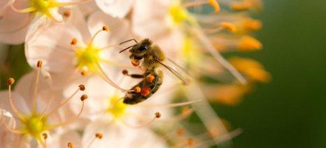 Σε εκλεκτικά εντομοκτόνα στρέφεται η Bayer, μετά από έρευνα για τις επιπτώσεις νεονικοτινοειδών στις μέλισσες