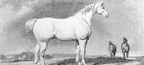 Καταδικάστηκαν τέσσερα άτομα στη Λάρισα για επιδοτήσεις που έπαιρναν με ανύπαρκτα άλογα