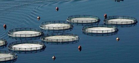Εγκρίθηκαν 112 επενδύσεις στις υδατοκαλλιέργειες