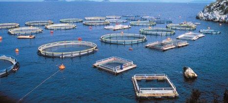 Παρατάθηκε η προθεσμία υποβολής φακέλου για «Υδατοκαλλιέργειες» και άλλες δύο δράσεις του ΕΣΠΑ