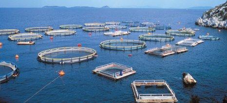 Αύξηση εξαγωγών και επενδύσεων καταγράφονται για τις ελληνικές θαλασσοκαλλιέργειες