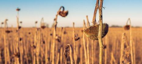 Σύνδεσμος Βιοντίζελ: Να μην εξαιρεθούν οι ενεργειακές καλλιέργειες από το πρόγραμμα απονιτροποίησης