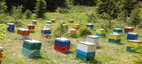 Σε απόγνωση οι μελισσοκόμοι του Έβρου από τις κλοπές μελισσών