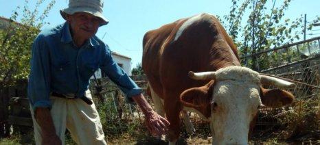 Κομοτηνή: Ένας ακούραστος αγροτοκτηνοτρόφος με μεράκι για τη δουλειά του
