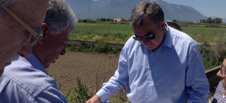 Ακόμα και το αναποτελεσματικό μέτρο της καύσης των καλαμιών στην ορυζοκαλλιέργεια υποστηρίζει το ΚΚΕ