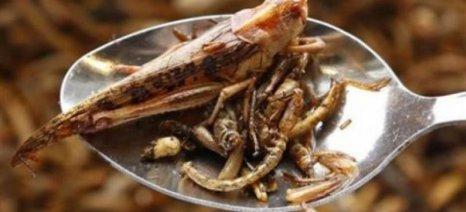 Η διατροφική αξία των εντόμων