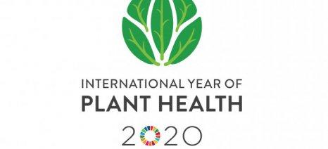 Διεθνές Έτος Υγείας των Φυτών ανακήρυξε ο FAO το 2020