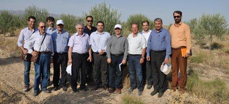 Η κυβέρνηση του Ιράν εξήγγειλε πρόγραμμα επένδυσης στην ελαιοκαλλιέργεια