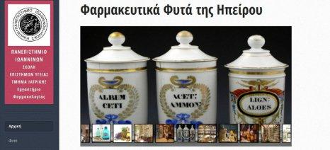 Ιστότοπο για τα αρωματικά και φαρμακευτικά φυτά της Ηπείρου δημιούργησε η Ιατρική Σχολή Ιωαννίνων