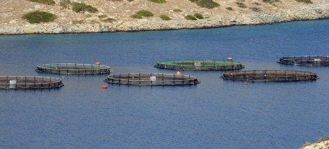 Οπισθοχωρεί σε όγκο παραγωγής η ελληνική υδατοκαλλιέργεια, αλλά κερδίζει σε μέση τιμή πώλησης