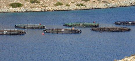 Επίσημη έγκριση για την Ελληνική Οργάνωση Παραγωγών Υδατοκαλλιέργειας