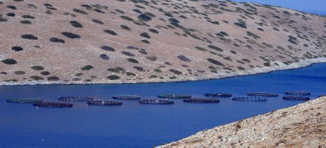 Προς νέο φορέα εκπροσώπησης στις υδατοκαλλιέργειες
