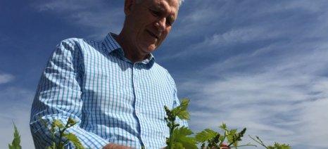 Με το ζόρι... ξηρασία περνάει αμπέλι στην Αυστραλία, για να είναι έτοιμο για την κλιματική αλλαγή