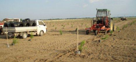 Εγκατάσταση δένδρων στο πλαίσιο της Αγροδασοπονίας για καινοτόμες κατευθύνσεις της αγροτικής επιχειρηματικότητας στη Θεσσαλία