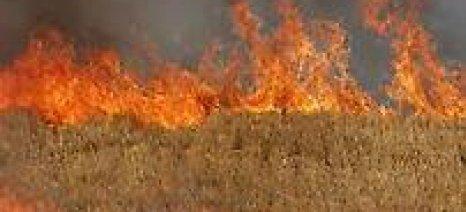 Απαγορευτική η καύση της καλαμιάς - σε περίπτωση ελέγχου κόβονται οι άμεσες ενισχύσεις