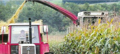 Οι χαμηλές τιμές παραγωγού και το κόστος μειώνουν τα αγροτικά εισοδήματα