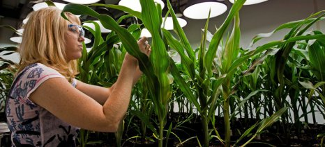Το Ευρωκοινοβούλιο λέει όχι στις εθνικές απαγορεύσεις των γενετικά τροποποιημένων οργανισμών