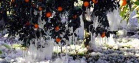 Μεγάλες ζημιές σε καλλιέργειες στην Πελοπόννησο από την κακοκαιρία