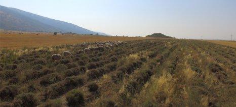 Η τιμή της καλλιεργήσιμης γης διπλασιάστηκε τα τελευταία 5 χρόνια στη Βουλγαρία παρά τους περιορισμούς που μπήκαν το 2014