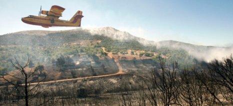 Έχουν καεί 10.000 στρέμματα ελαιώνες στη Λακωνία - εξατομίκευση ζημιών