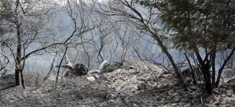 Αναγγελία ζημιάς στον ΕΛΓΑ έγινε ήδη για την πυρκαγιά στον Αποκόρωνα Χανίων