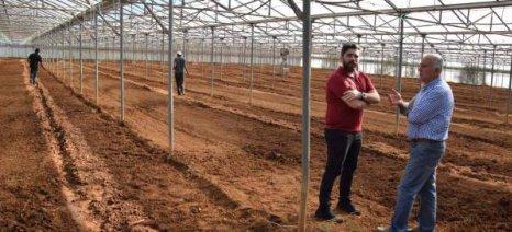 Σπάρθηκε η πρώτη θερμοκηπιακή καλλιέργεια βιομηχανικής κάνναβης στη Μεσσηνία