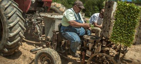 Και ο αγρότης τι θα κάνει; Ποιος θα του υπογράψει βεβαίωση μετακίνησης στο χωράφι και στο μαντρί;