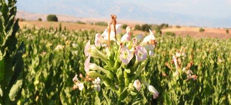 Ερώτηση στον Αραχωβίτη για τα προβλήματα των καπνοκαλλιεργητών της Ροδόπης